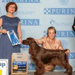 GINGER Best In Specialty Show Winning Group Winning Multiple Group Placing GrCH CH SandsCape Pardon Me Boys #1 Field Spaniel Bitch for 2012