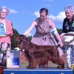 HUDSON Multiple Res. BESTS IN SHOW Pictured here winning a Sporting Group First under the notable Ms. Michele Billings #1 Field Spaniel 2012